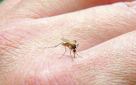 Κουνούπια: Διώξτε τη φαγούρα από τα τσιμπήματα με φυσικό τρόπο!