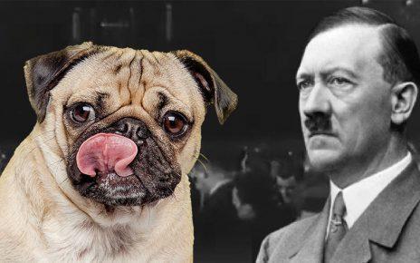 Πρόστιμο 950 ευρώ σε ιδιοκτήτη που έμαθε τον σκύλο του να... χαιρετά ναζιστικά! (βίντεο)