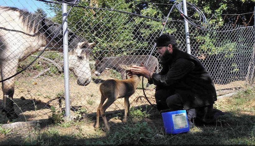 Άγιος Παΐσιος: Να παραδειγματιζόμαστε από τα ζώα