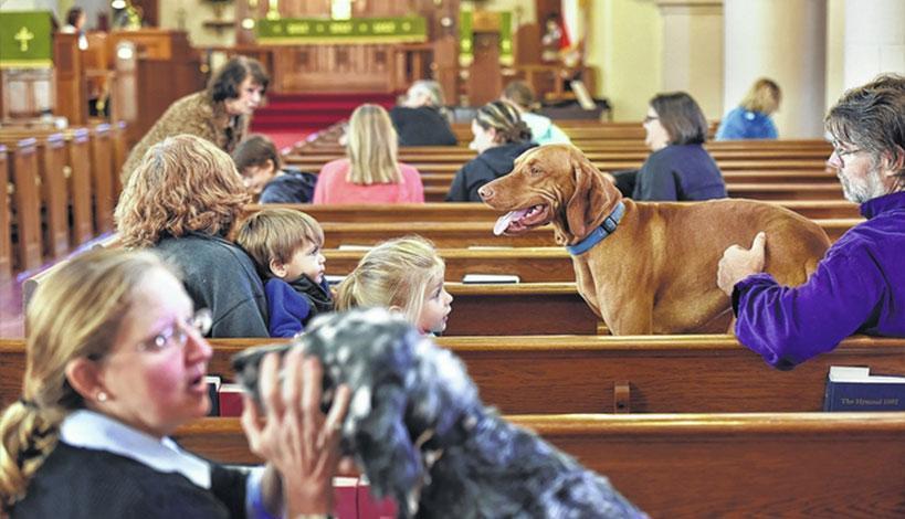 Επιτρέπεται να εισέρχονται τα ζώα μέσα στην Εκκλησία;
