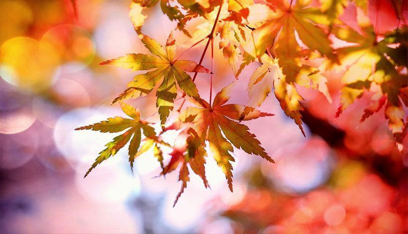 Φθινοπωρινός αναμένεται ο καιρός τις ερχόμενες μέρες