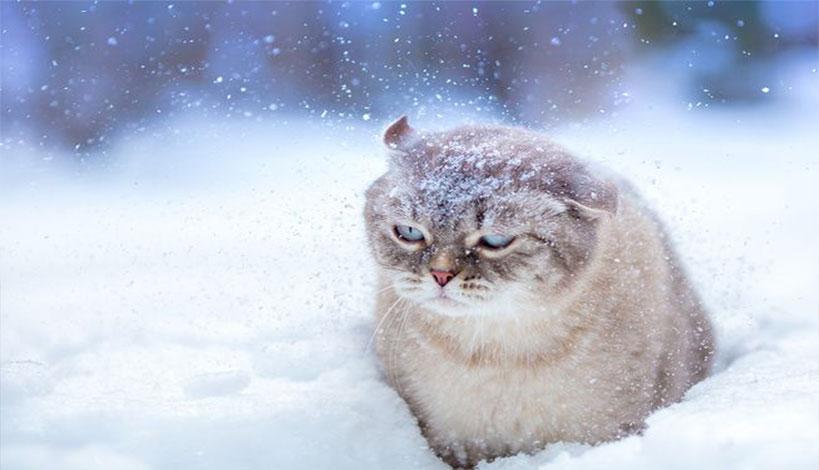Έφθασε ο χειμώνας - Δείτε τα πρώτα χιόνια
